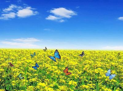 Разноцветные бабочки над золотистой