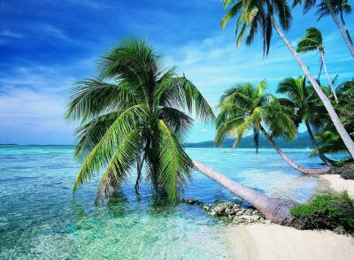 Пальмы растущие на песчаных берегах