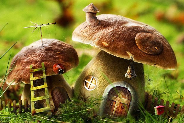 На домиках грибочках на опушке леса