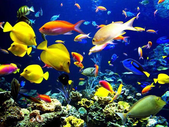Привет.  И я к вам.  С рыбками нам в помощь!